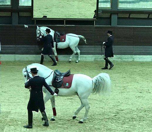 Lipica, Slovenia: Show de equitação