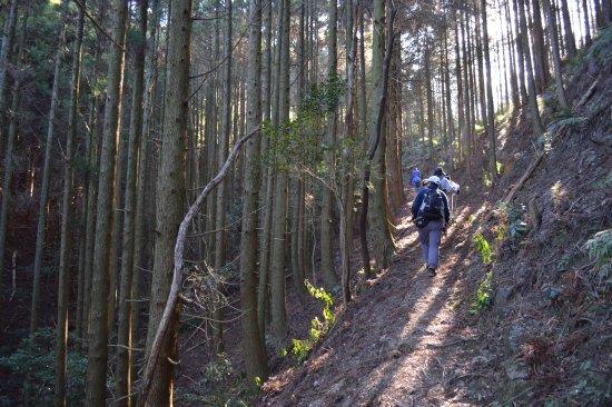 Saiki, Japan: 木漏れ日の美しい山道