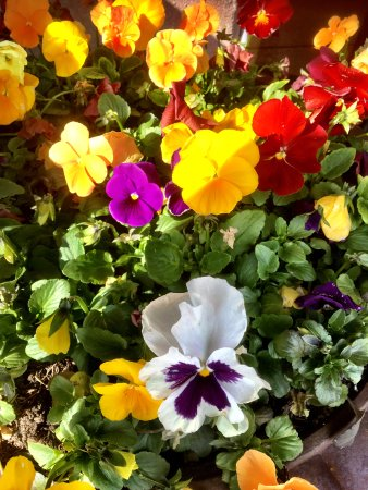 Highland Park, IL: Flowers at entrance...