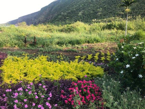 Kealakekua Bay Bed & Breakfast: Walking around the beautiful gardens - it's just so hard not to take a million photos!