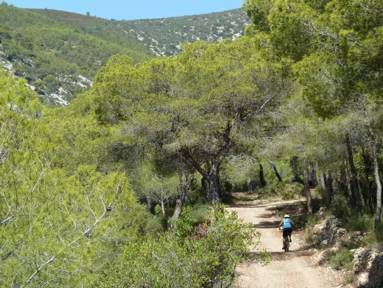 The Bike Inn Spain: Mountain bike trails