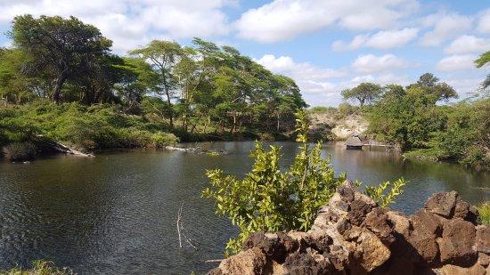 Mzima springs a place to be. - Review of Mzima Springs, Tsavo National Park  West, Kenya - Tripadvisor