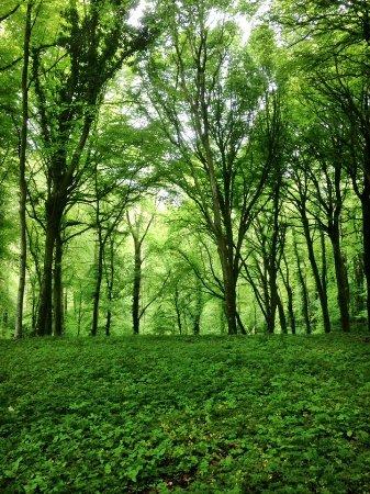 Le bois quelques pas des chambres pour une balade bucolique id ale photo de un matin dans - Un matin dans les bois ...