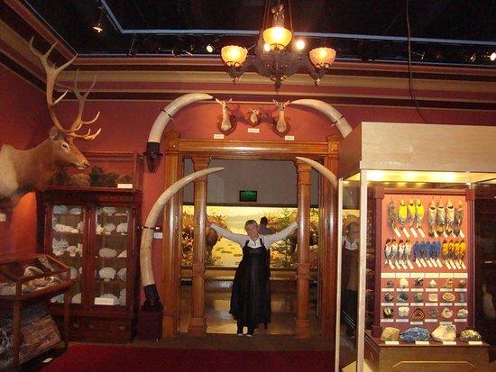 Grand Rapids Public Museum: комната коллекции пернатых