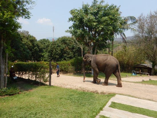 ‪Thai Elephant Care Center‬