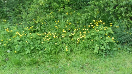 Middleton Park: Buttercups and daisies