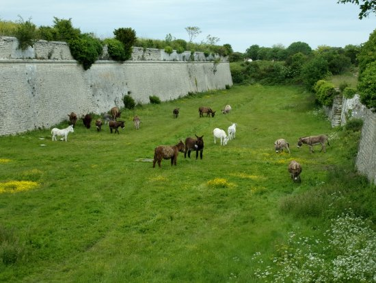 Saint Martin de Re, France : remparts est avec les ânes au pâturage