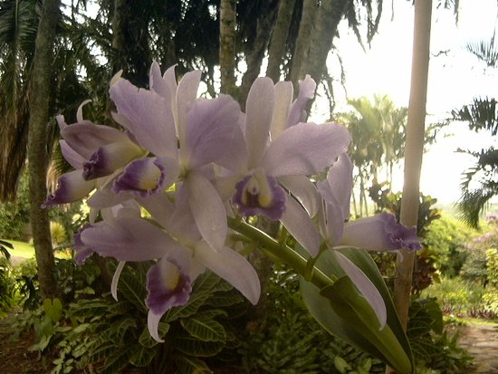 Ocean Grove Guest House: A flowering orchid in the garden