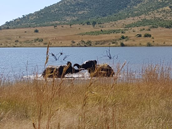 Pilanesberg Safaris and Tours: Elephants playing in the water