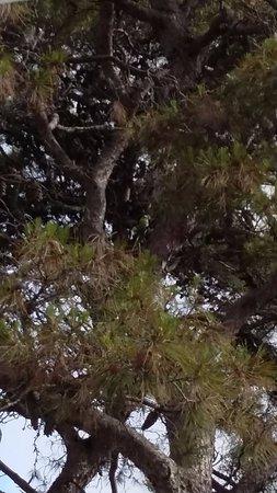 Casa Oliver Principe Real : de grands arbres avec des grandes perruches vertes