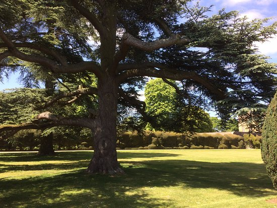 Montacute, UK: Ancient trees in the formal gardens
