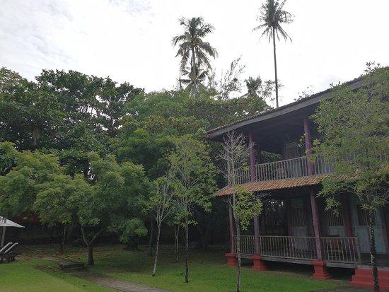Temple Tree at Bon Ton: IMG_20170511_094418_large.jpg