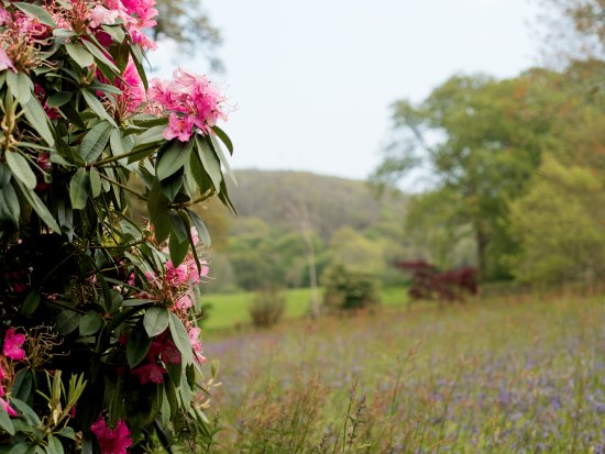 Penryn, UK: Enys Gardens in May