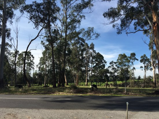 Drouin, Australia: Robin Hood Reserve