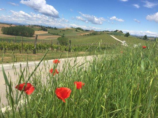 Castagnole Monferrato, Italien: Beautiful view of their vineyard