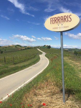 Castagnole Monferrato, Italien: Ferraris!