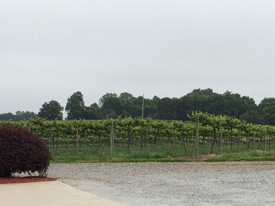 Vale, NC: vineyard