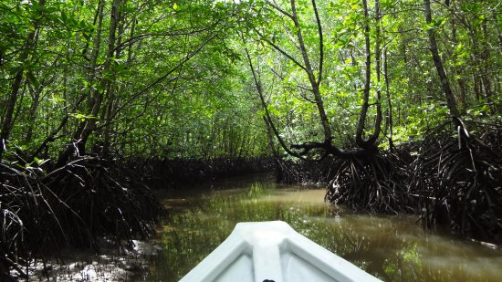 Kilim Karst Geoforest Park: Into the mangroves