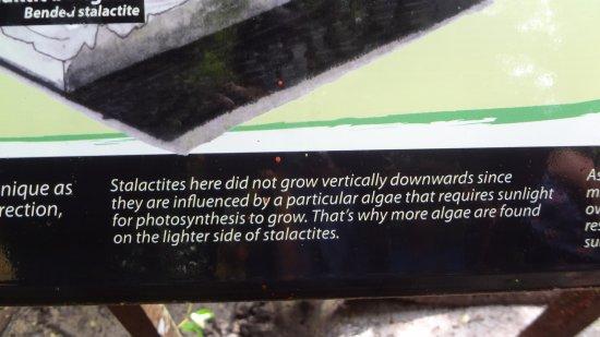 Kilim Karst Geoforest Park: info about stalactites