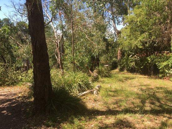 Croydon, Australië: Alto Reserve