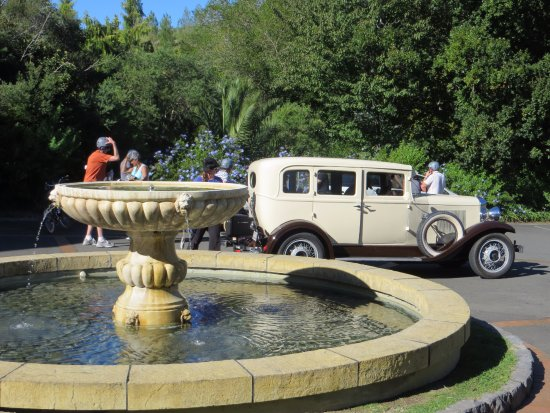 Hooters Vintage and Classic Vehicle Hire Ltd: Vintage Classic auto at the winery