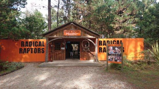 Plettenberg Bay, Sudáfrica: Radical Raptors