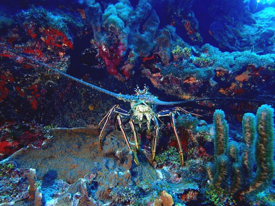 East End, Grand Cayman: Look below and under ledges...