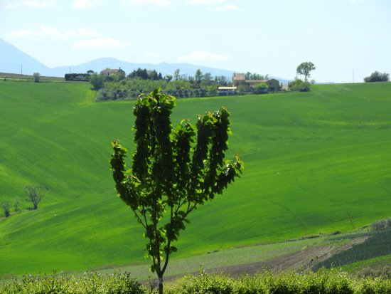 Monte Porzio, Italy: Panorama 3