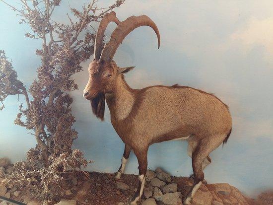 Μουσείο Φυσικής Ιστορίας Κρήτης: 20170512_172950_large.jpg