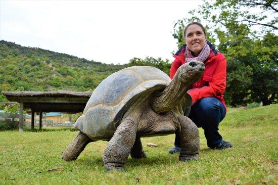 Sorede, Francja: la tortue Caline et pauline
