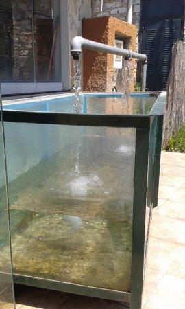 Filippiada, Grecja: Η δεξαμενή με τα ψάρια .