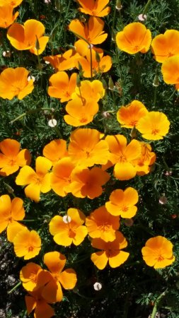 Clovis, Kalifornia: Flowers