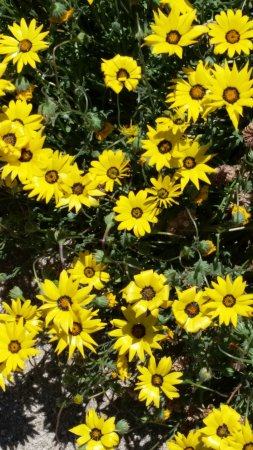 Clovis, CA: flowere