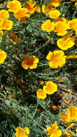 Clovis, CA: Flowers