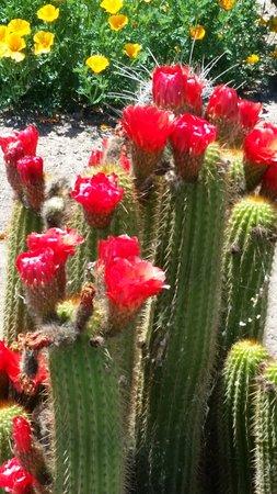 Clovis, Kalifornien: Cactus