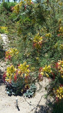 Clovis, Kalifornien: Plants