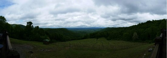 Dyke, VA: Panorama of the vineyard