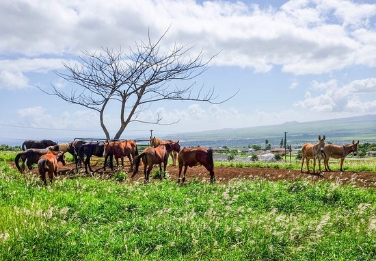 Makani Olu Ranch: photo0.jpg