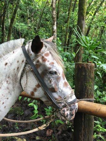 Dominical, كوستاريكا: photo1.jpg