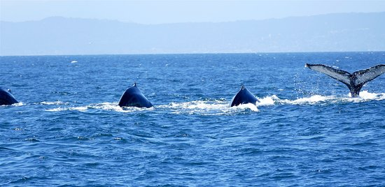 Moss Landing, Kalifornia: Lots of Humpbacks