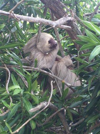 Punta Culebra Nature Center: photo0.jpg