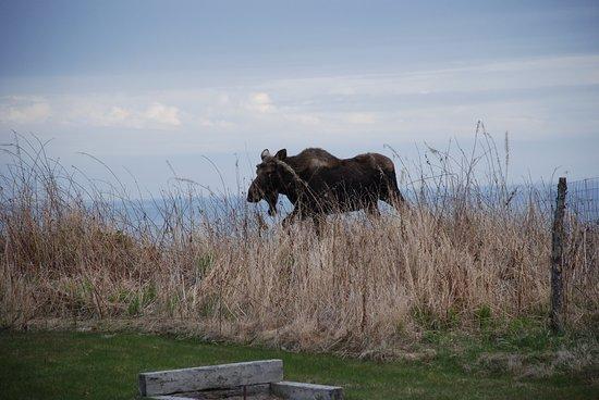 Clam Gulch, Αλάσκα: photo7.jpg