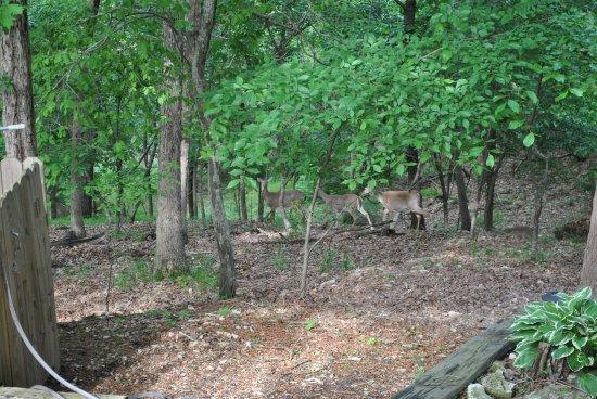The Lodge: Deer