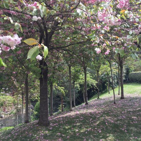 Le jardin japonais un lieu pour les amoureux de la nature for Jardin japonais toulouse