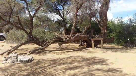 Usakos, Namibia: Spitzkoppe Mountain Tented Camp