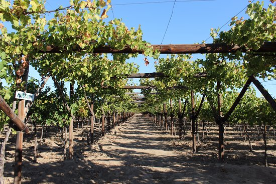 Calitzdorp, Afrika Selatan: De Krans Wines