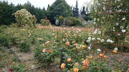 le jardin de roses photo de le mas des figues saint r my de provence tripadvisor. Black Bedroom Furniture Sets. Home Design Ideas