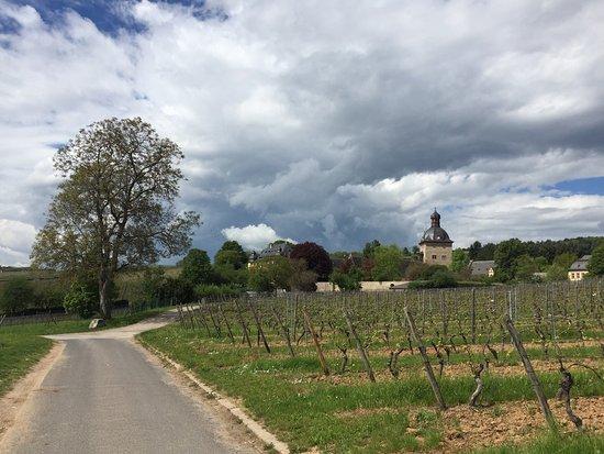 Oestrich-Winkel, Alemania: Blick in Richtung Schloss Vollrads