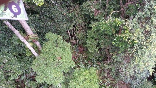 North Tamborine, Australia: 20170514_130916_large.jpg
