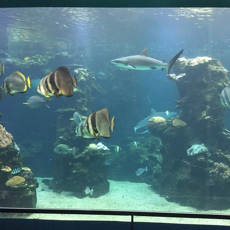 Aquarium des Lagons Nouvelle Caledonie: photo5.jpg
